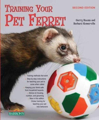 Small Pets Diy Training Your Pet Ferret Pet Ferret Ferret Ferret Toys