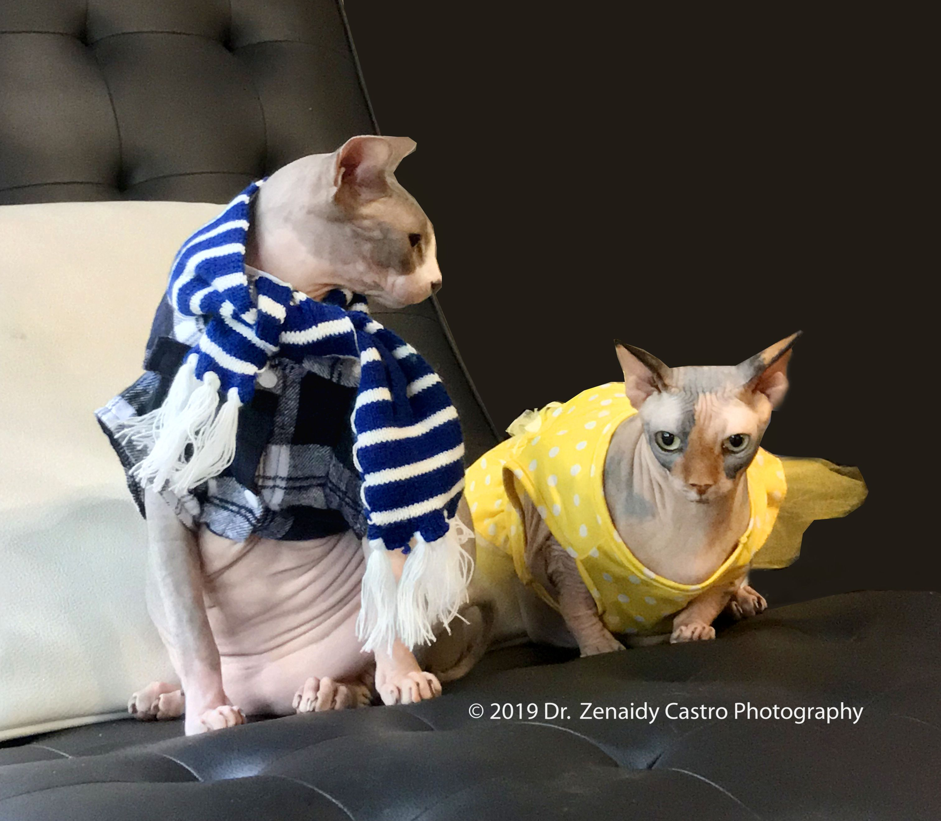 Pin by Dentist in Melbourne Dr Zenaid on Cute Pet Sphynx