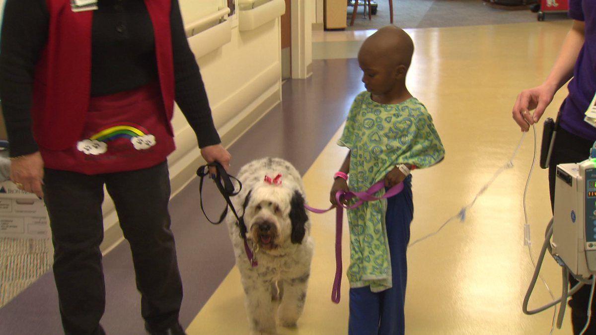 14++ Animal advocate pet hospital ideas in 2021