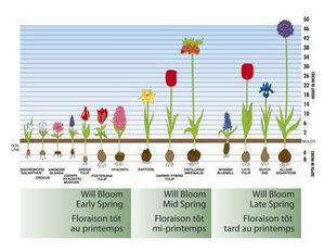 Spring Bulb Garden Ideas   Google Search