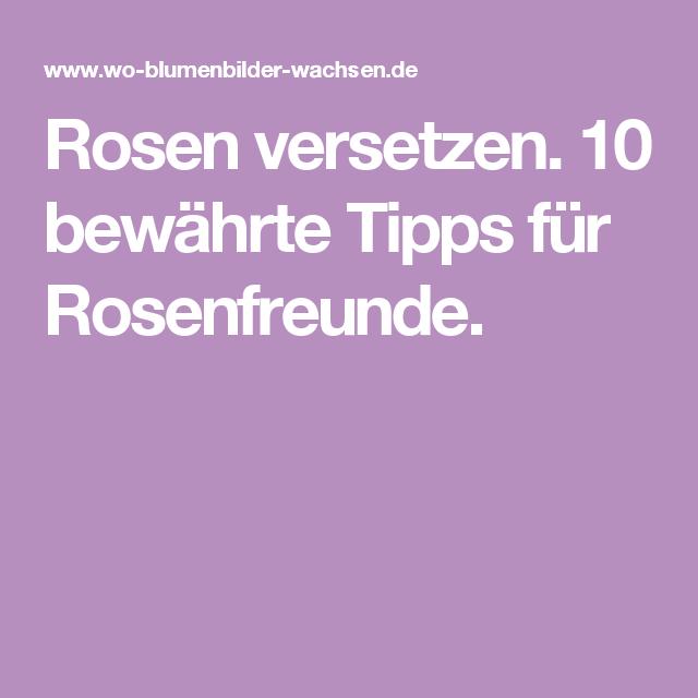 rosen versetzen 10 bew hrte tipps f r rosenfreunde garten pinterest rose tipps und g rten. Black Bedroom Furniture Sets. Home Design Ideas