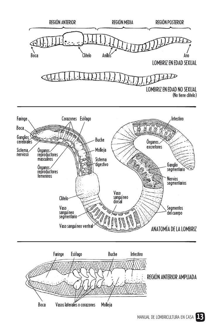 Manual de lombricultura en casa | PDF to Flipbook | Jardines ...