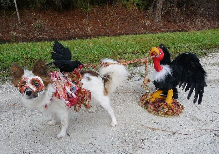 zombie dog being eaten by a vulture pet costume road kill costume