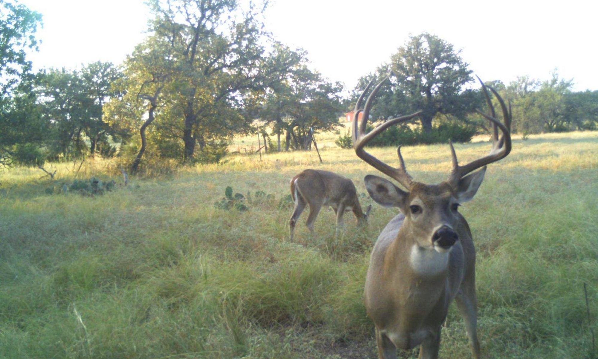 Deer management at buck manager whitetail bucks deer