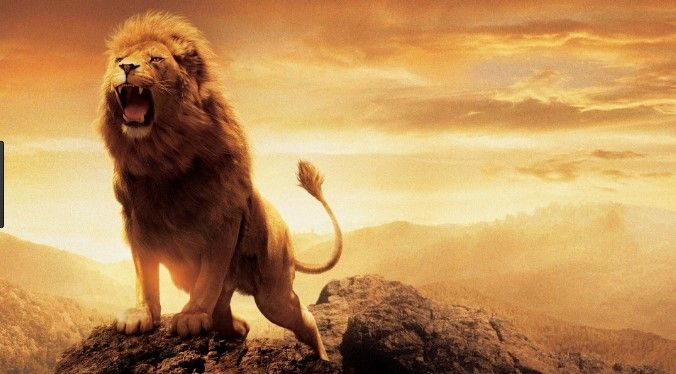 1080p Hd Lion Wallpaper High Quality Desktop Iphone And Android