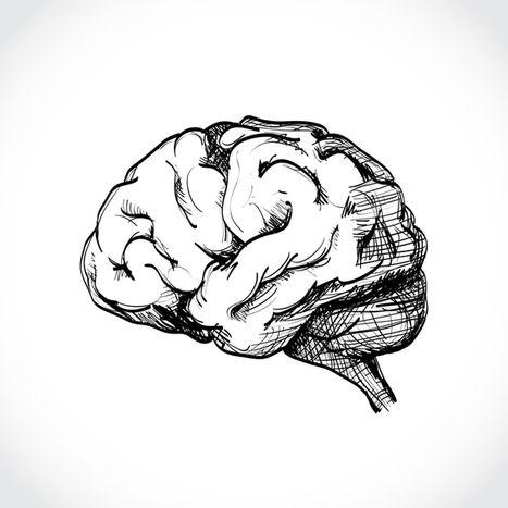Debunking Brain Myths   Scoop.it