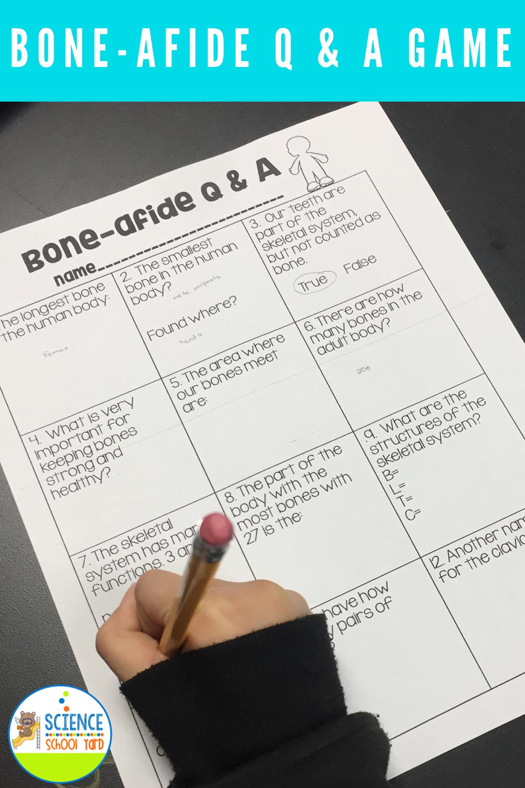 6 Skeletal System Game Ideas For Studying Bones
