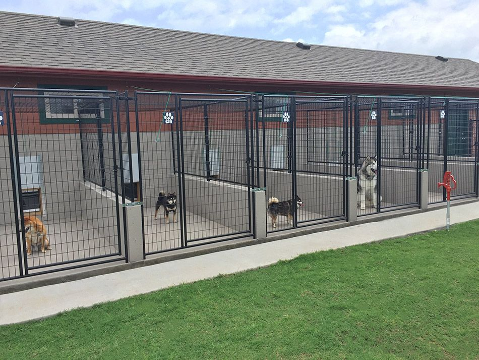 Attaboy boarding kennels facility kennel design for Building a dog kennel business