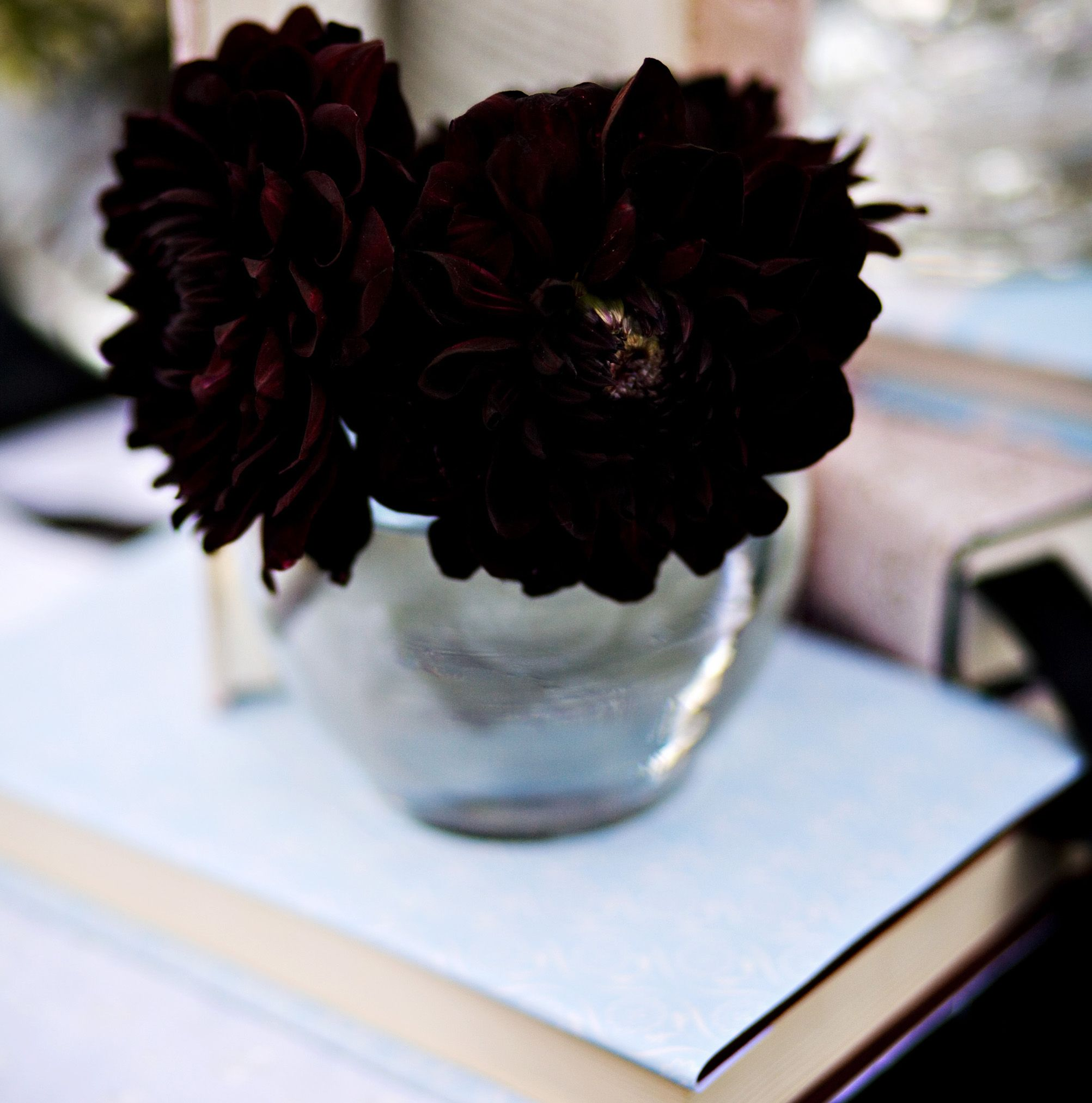 19 sophisticated black flowers for your unique garden black dahlia dahlia and black dahlia flower meaning all design idea izmirmasajfo Gallery