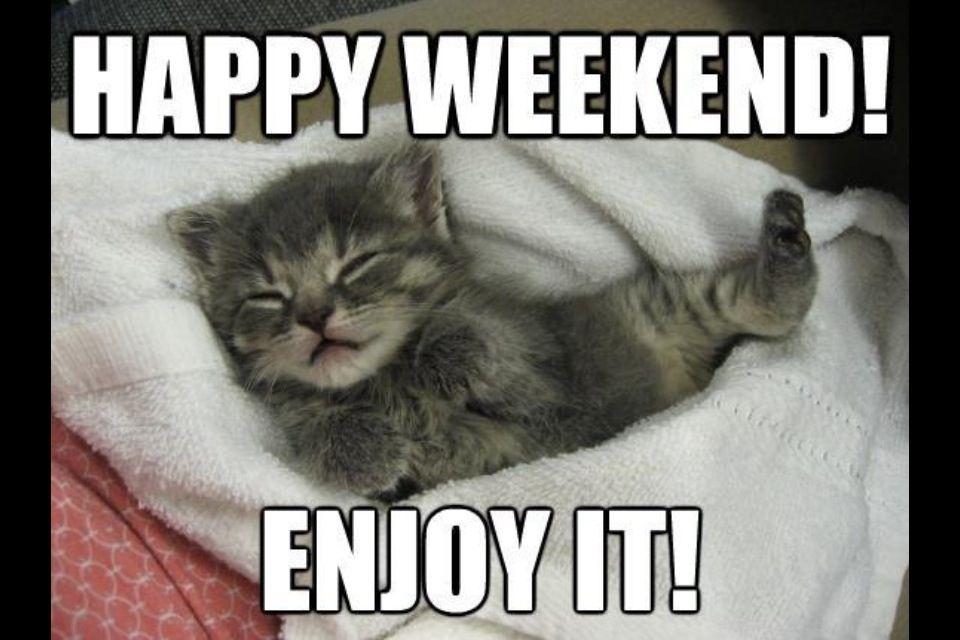 Bildergebnis für weekend cat