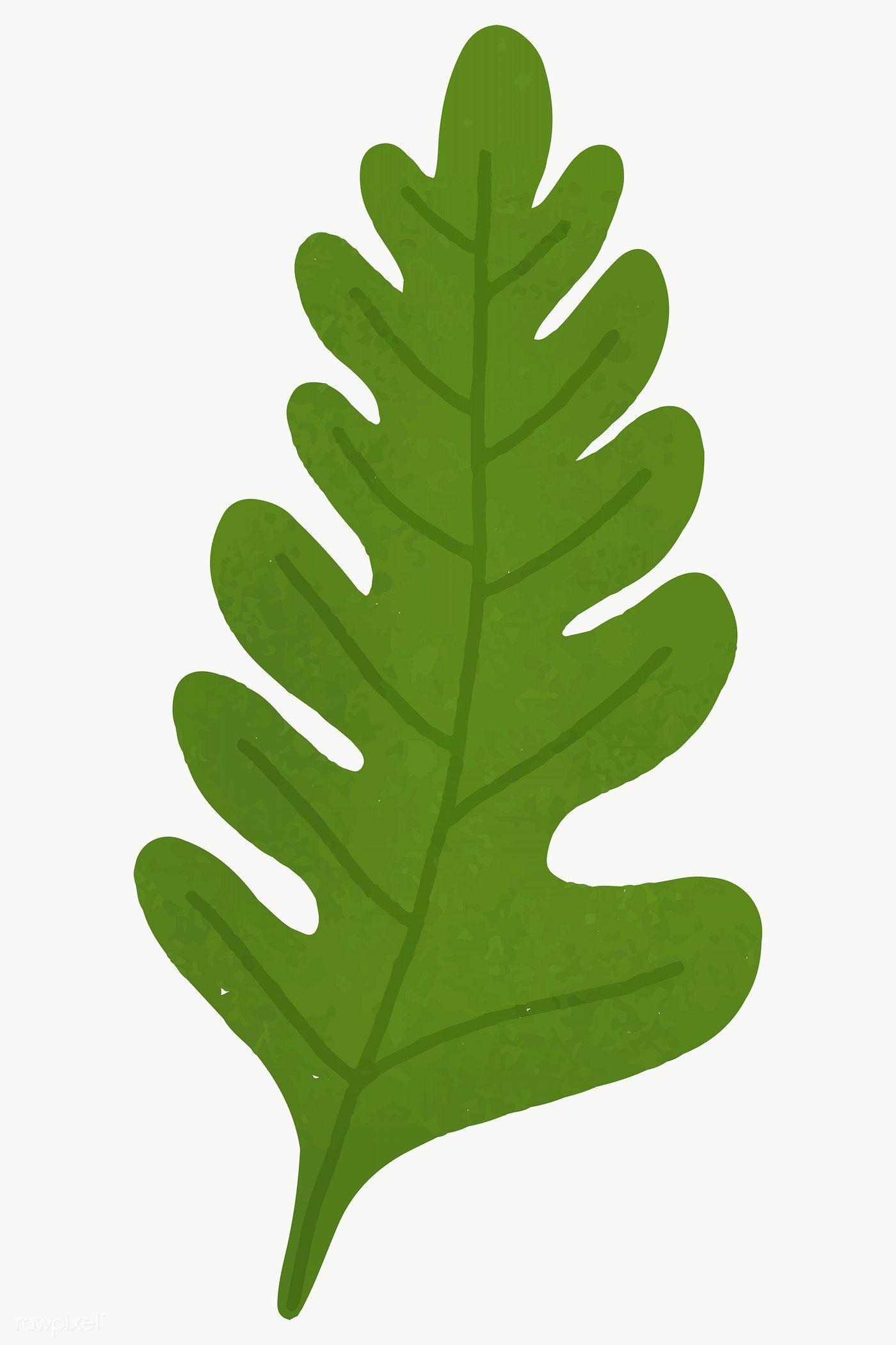 Green Oak Leaf Design Element Transparent Png Free Image By Rawpixel Com Aum