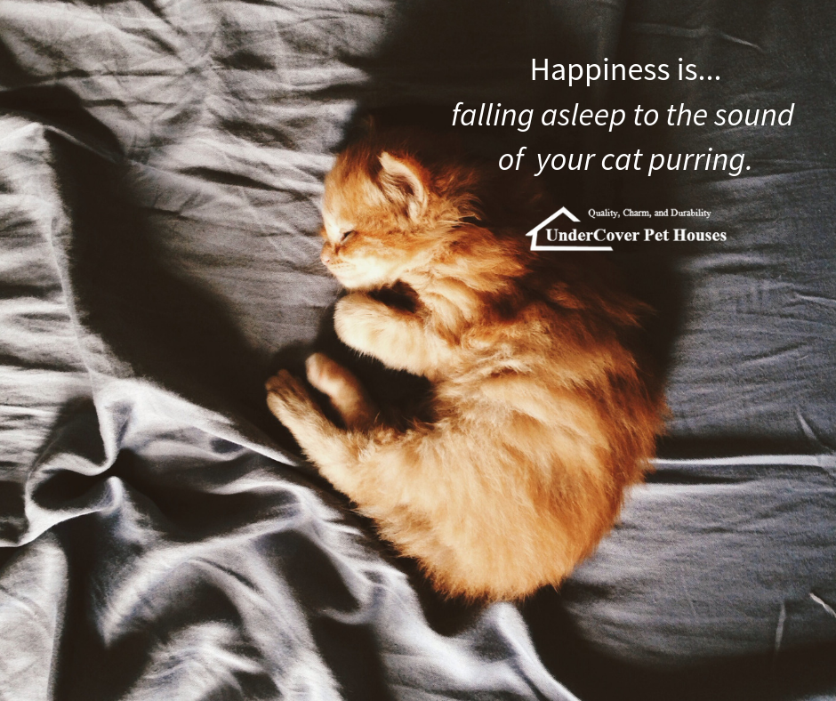 Happiness Is Falling Asleep To The Sound Of Your Cat Purring Catlover Catparent Catpurr Itsthelittlethings Thurs Outdoor Cat House Cat Purr Purring Cat