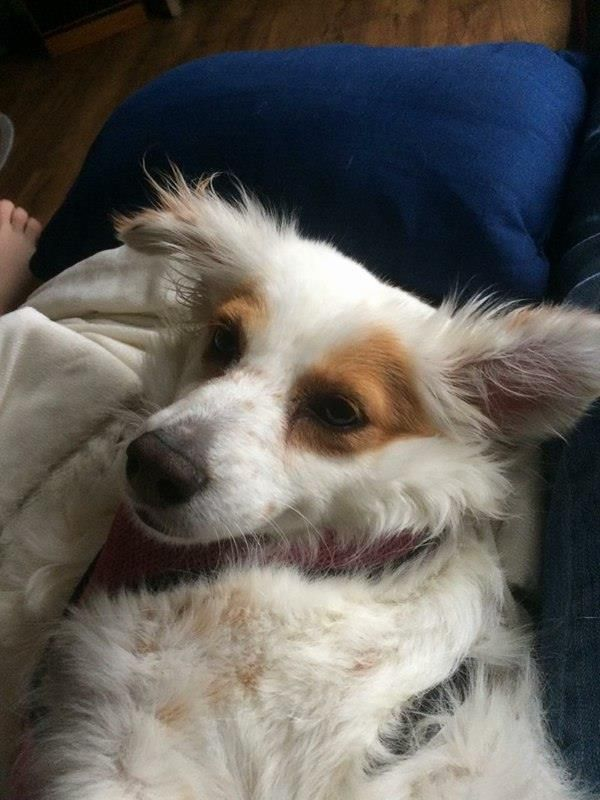 Adopt Tiffany on Shepherd mix dog, Animals, Rescue dogs
