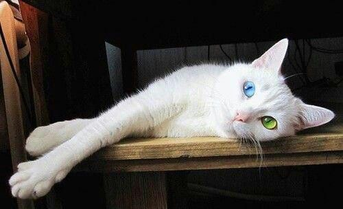 Two-toned eyes!!