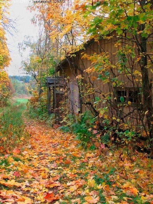 Sonbahar Mevsimi ile ilgili görsel sonucu
