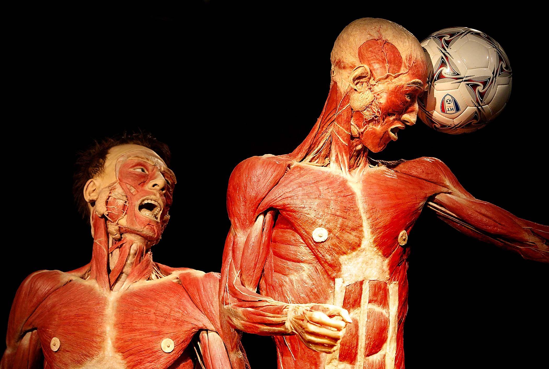 body works | Human Anatomy | Pinterest | Body works, Bodies and Anatomy