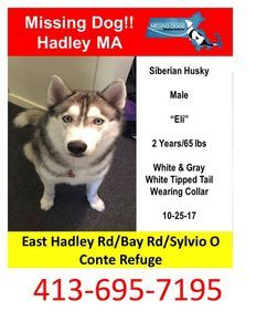 Pin By Found Lost Dogs On Lost Dog Losing A Dog Dogs Husky