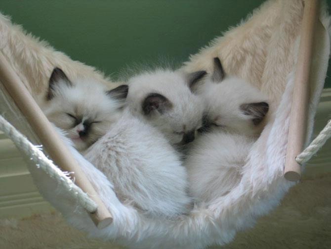 a hammock of kittens