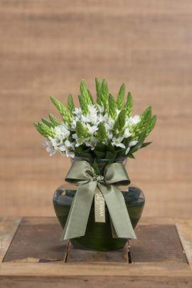 Flores – Página: 11 – Sta Gemma Floricultura