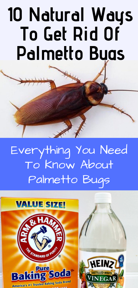 10 Natural Ways To Get Rid Of Palmetto Bugs. Everything