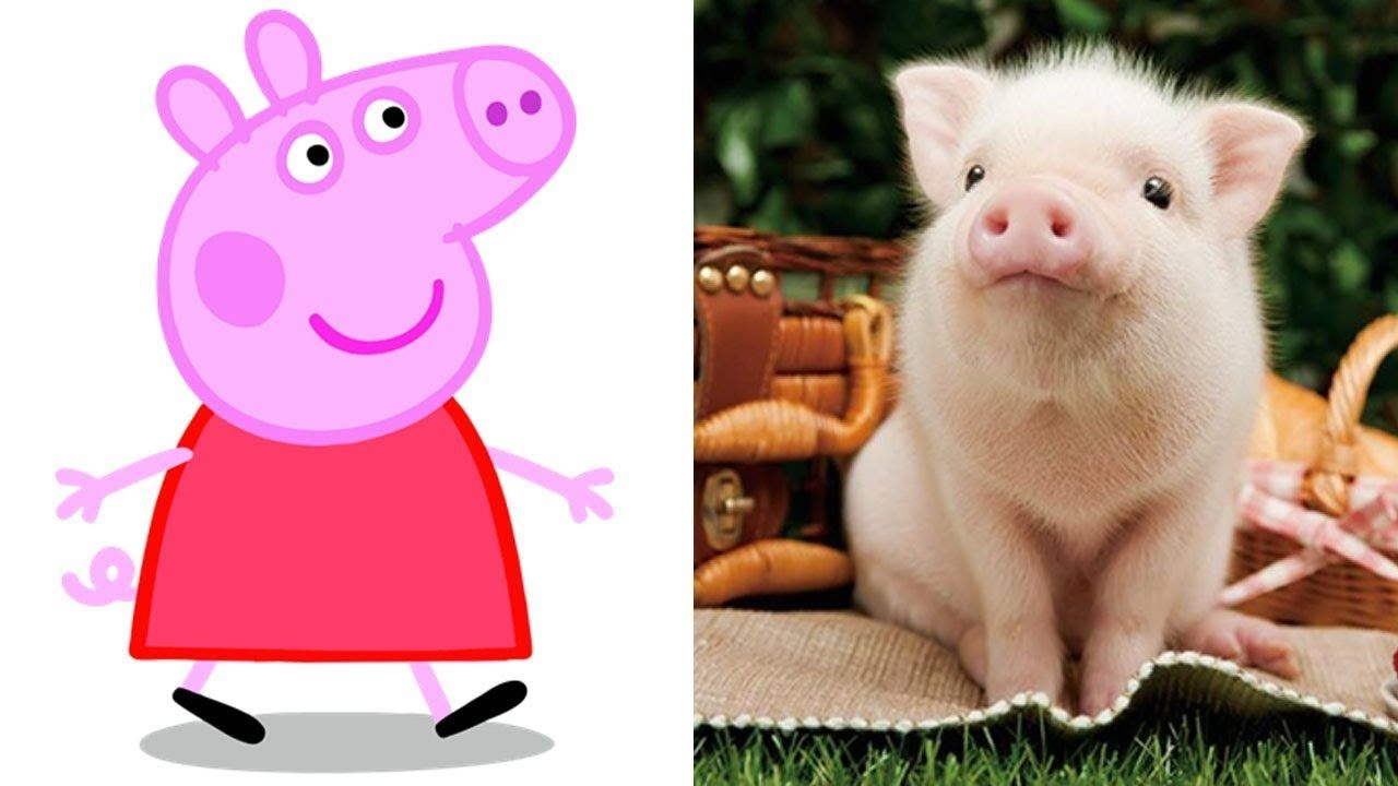 Peppa Pig Cartoon Characters In Real Life 2018 Cute Animals From