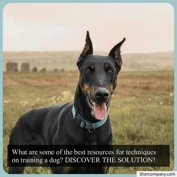 Dog Training Pictures Check Out The Pic For Various Dog
