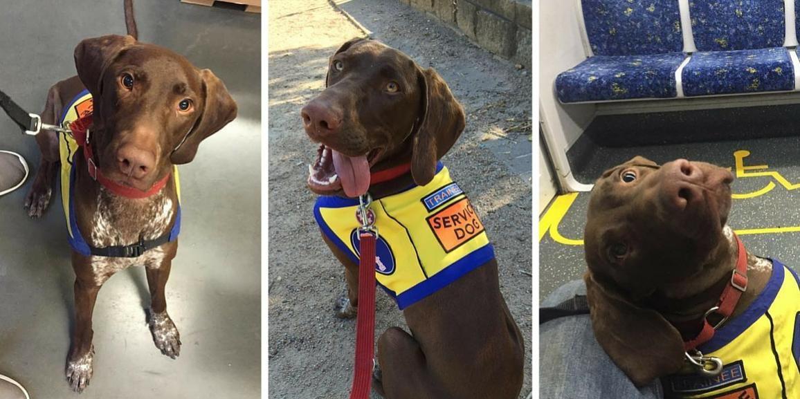 Training My Psychiatric Service Dog Minddogs Pinterest