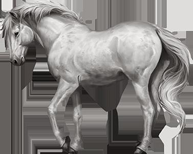 Camargue Horse Horses Black Horse Camargue Horse
