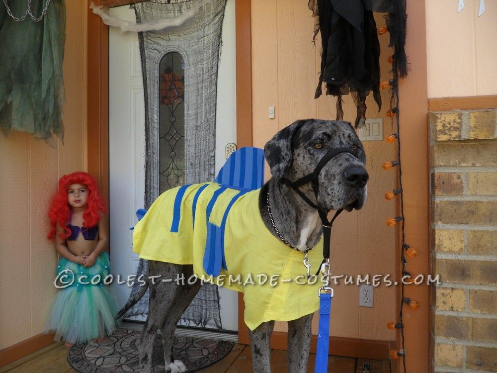 ff5a5e9e33d7 Homemade Flounder Costume for a Dog... This website is the Pinterest of  costumes