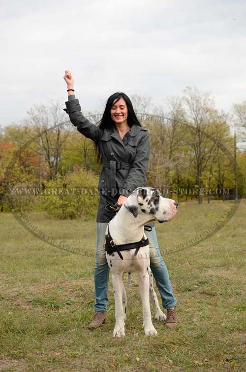 Multifunctional Great Dane Dog Leather Harness 45 00