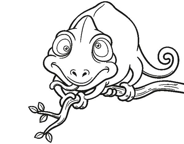 Dibujo de Camaleón en una rama para colorear | animales | Pinterest ...