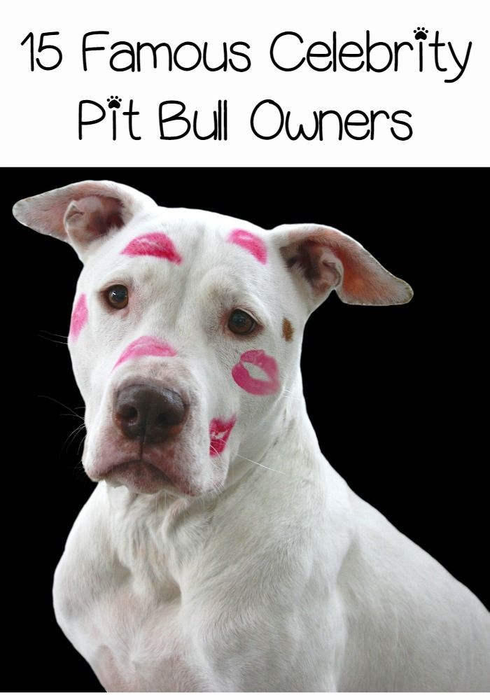 Photo of Famous Celebrity Pit Bull Owners – DogVills