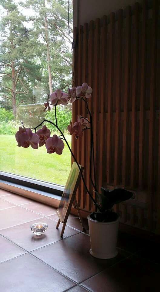 Kappelin orkidea.