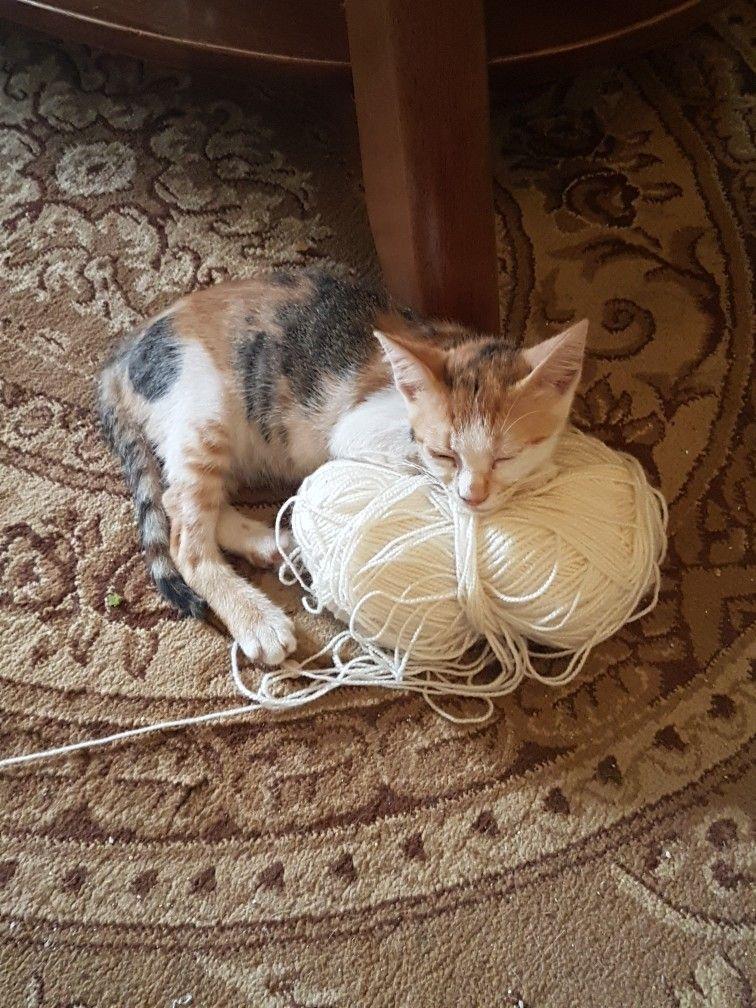 Pin by نائلة إبراهيم on my cat sarah Cats, Cats cradle