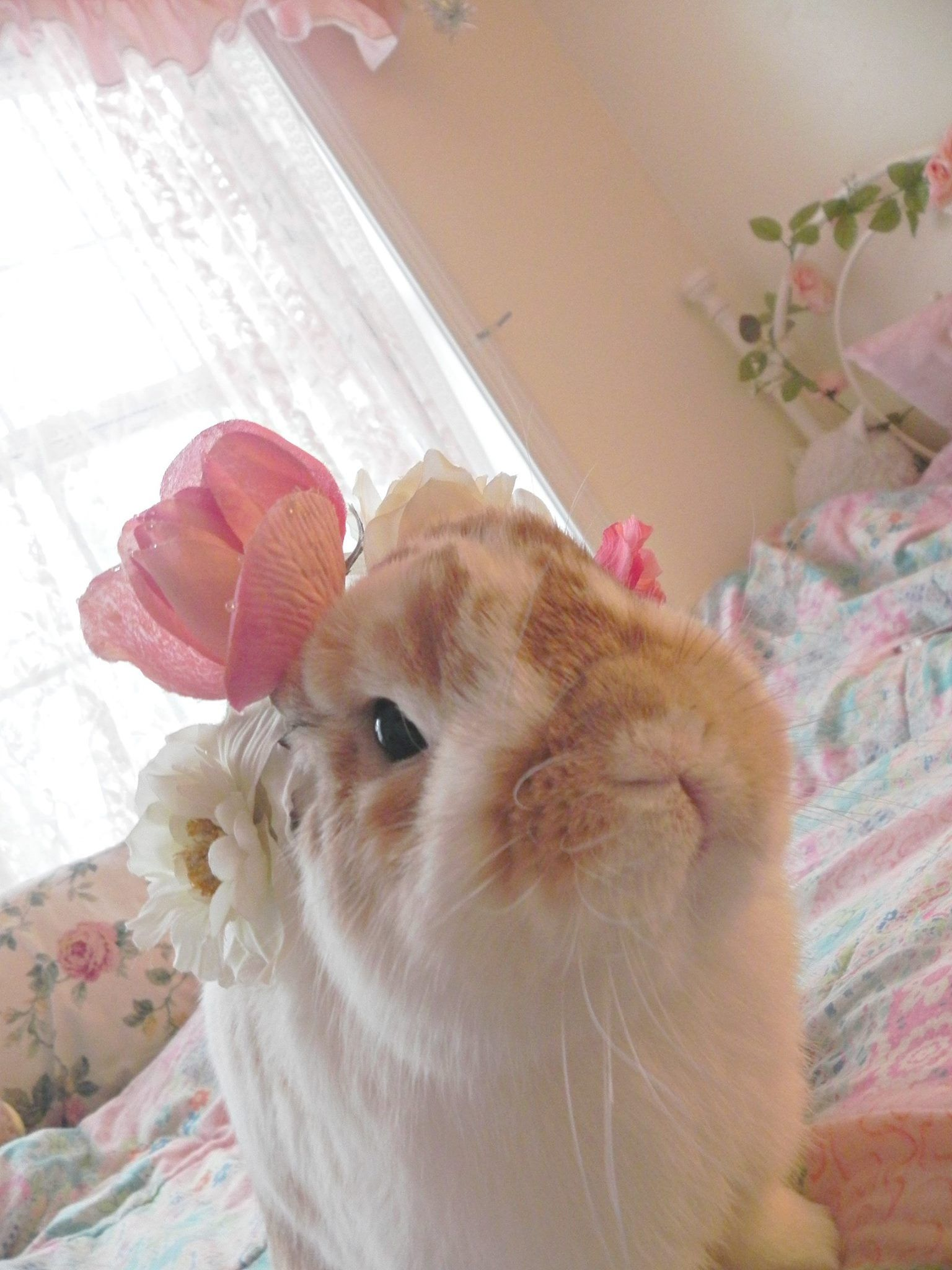 Meet Chewie! He's 6 years old and so cute! rabbits