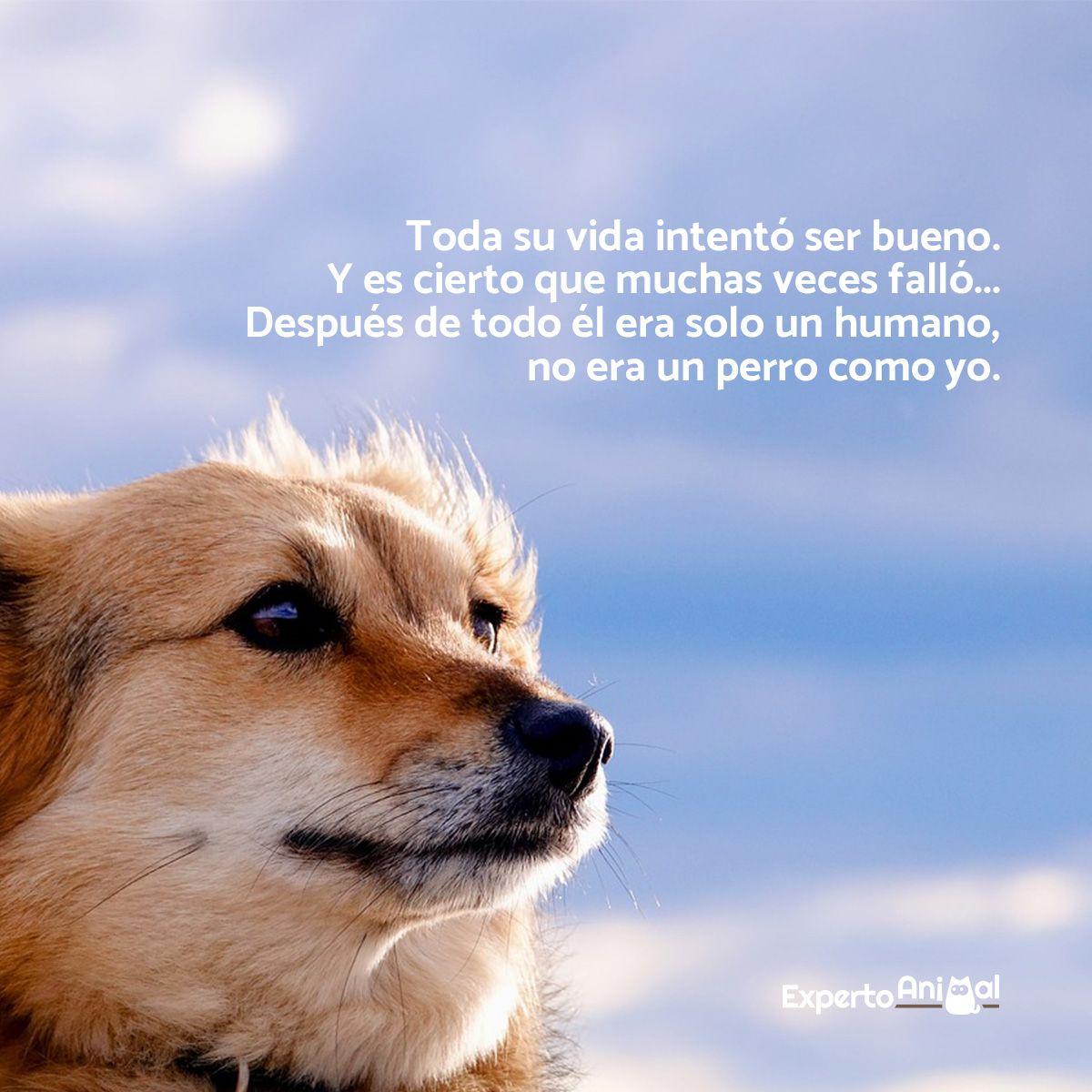 Frases De Perros Con Imagenes Perros Frases Perros Amantes