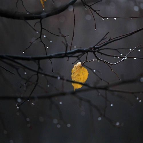 """""""Raindrops fall between broken branches, grasping rough edges in a gentle grip. These trees grew tough in times of war, strengthened boughs  stand proud and tall. This sadness isn't lonely."""" -E.M.B"""