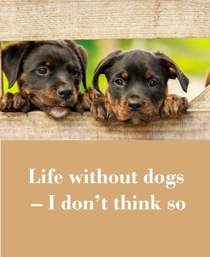 42 Dog Sayings Which Will Touch Your Heart Rottweiler Puppies Puppy Dog Images Dogs