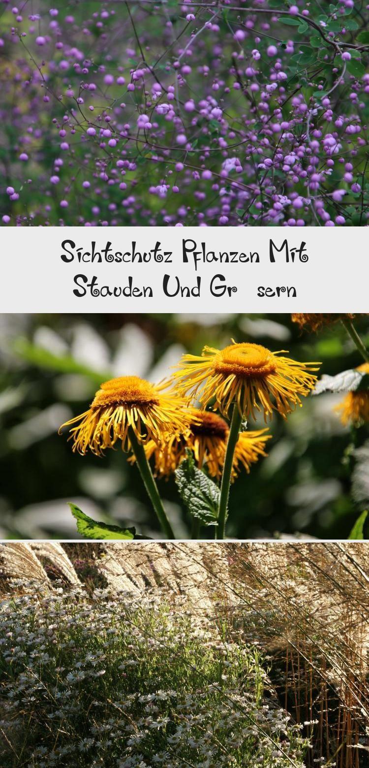 Sichtschutz Pflanzen Mit Stauden Und Grasern Plants Garden