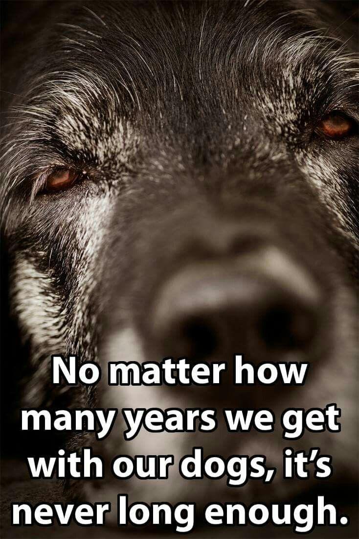 63cda05183c2d1a596ddccf1f4bf3bf4 - How Long Does It Take To Get Over A Loss Of A Pet
