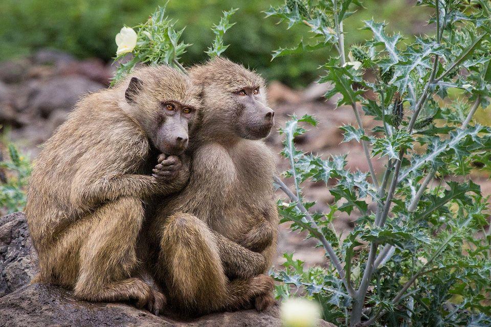 Wildlife Photos Tomer Razabi Animaux Singe