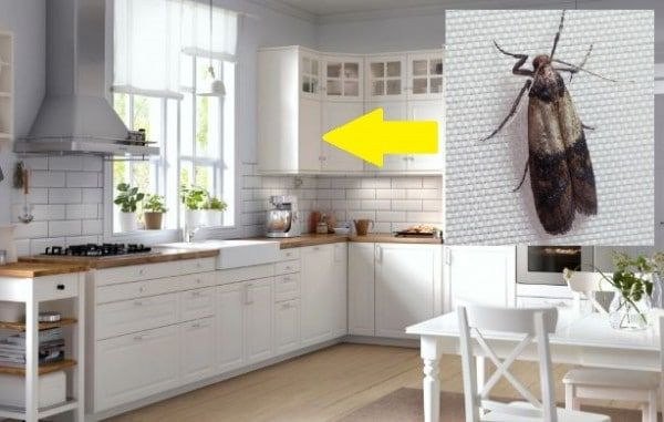 How to Get Rid of Moths in the Kitchen in 2020 | Kitchen ...