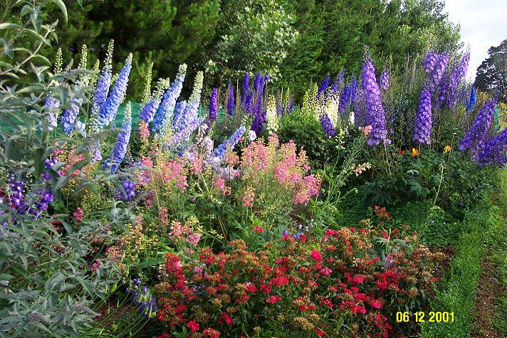 What Plants Grows Well With Delphinium Google Search Flower