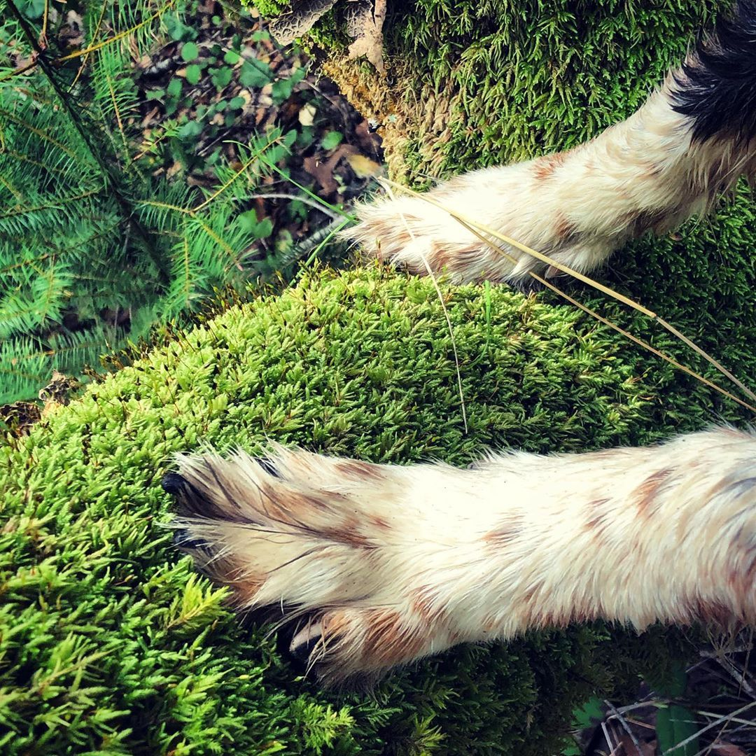 Green moss wet paws... in 2020 Wet paws, Rescue dogs, Dogs