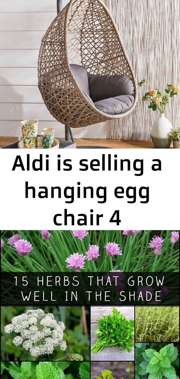 Aldi's hanging egg chair is back! 15 Herbs That Grow Well