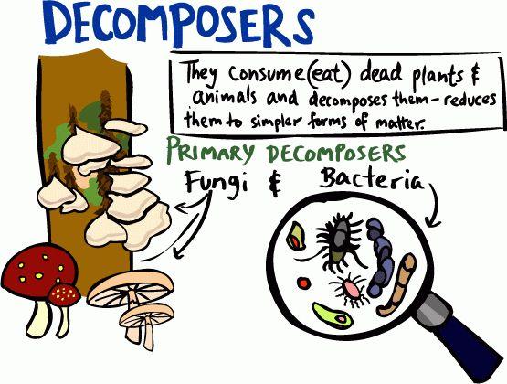 Decomposer Diagram Wiring Diagram