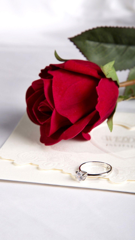 مســـــا الــــورد Love Rose Flower Beautiful Red Roses Beautiful Roses