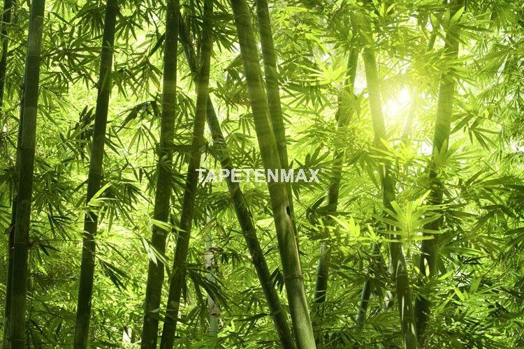 Kaufen Sie das Wandbild Bamboo forest von XXLwallpaper hier günstig online. Fototapeten auf Vliesträger im TapetenMax Shop bestellen.