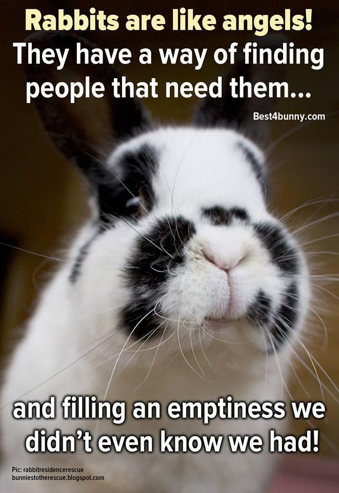 Rabbit care advice | Pet bunny rabbits, Bunny quotes, Rabbit