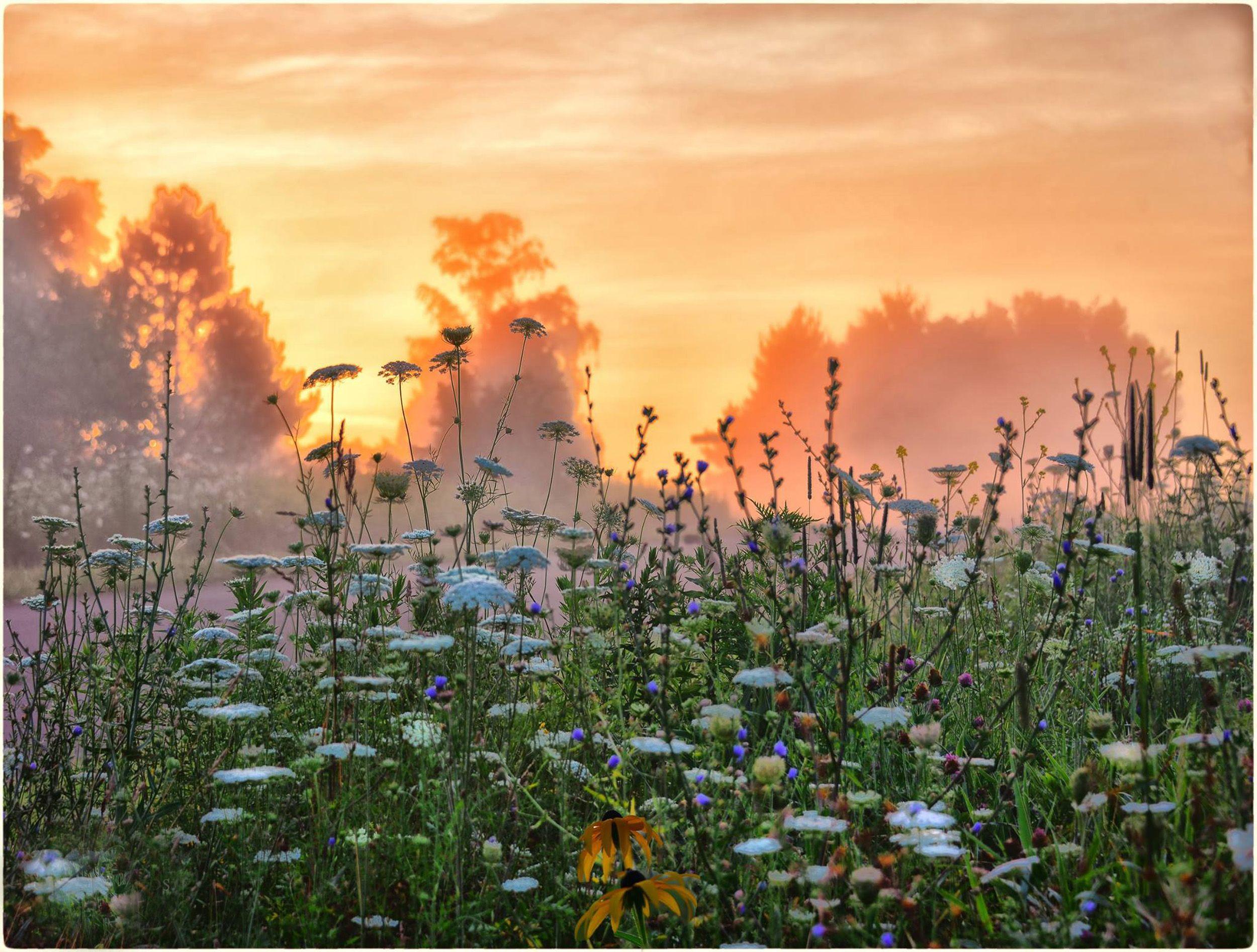 Wildflower Sunset!!!